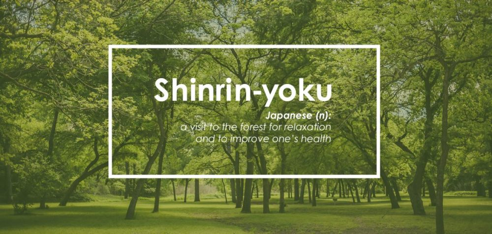 Forest-Bathing-Shinrin-Yoku-Plano-Magazine-Feature-2-1170x557