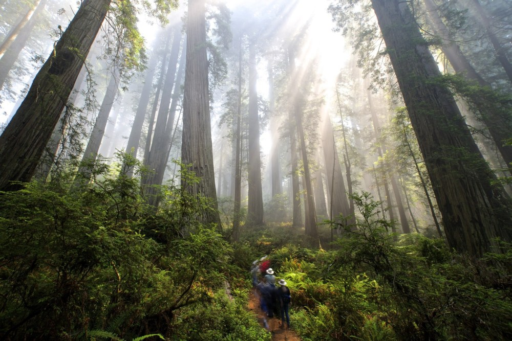 Save the Redwoods League Forest